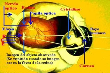 Proceso óptico de la visión