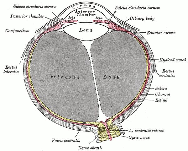 uvea ojo rojo