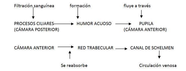 esquema anatomía del ojo