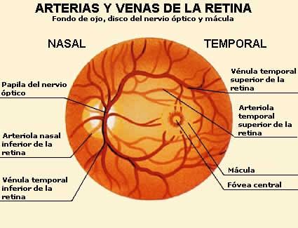 anatomia ocular de las venas del ojo